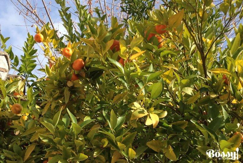 Granada Spain Orange tree