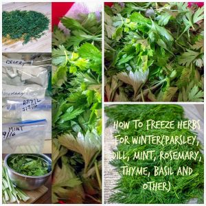 How to freeze herbs for winter1