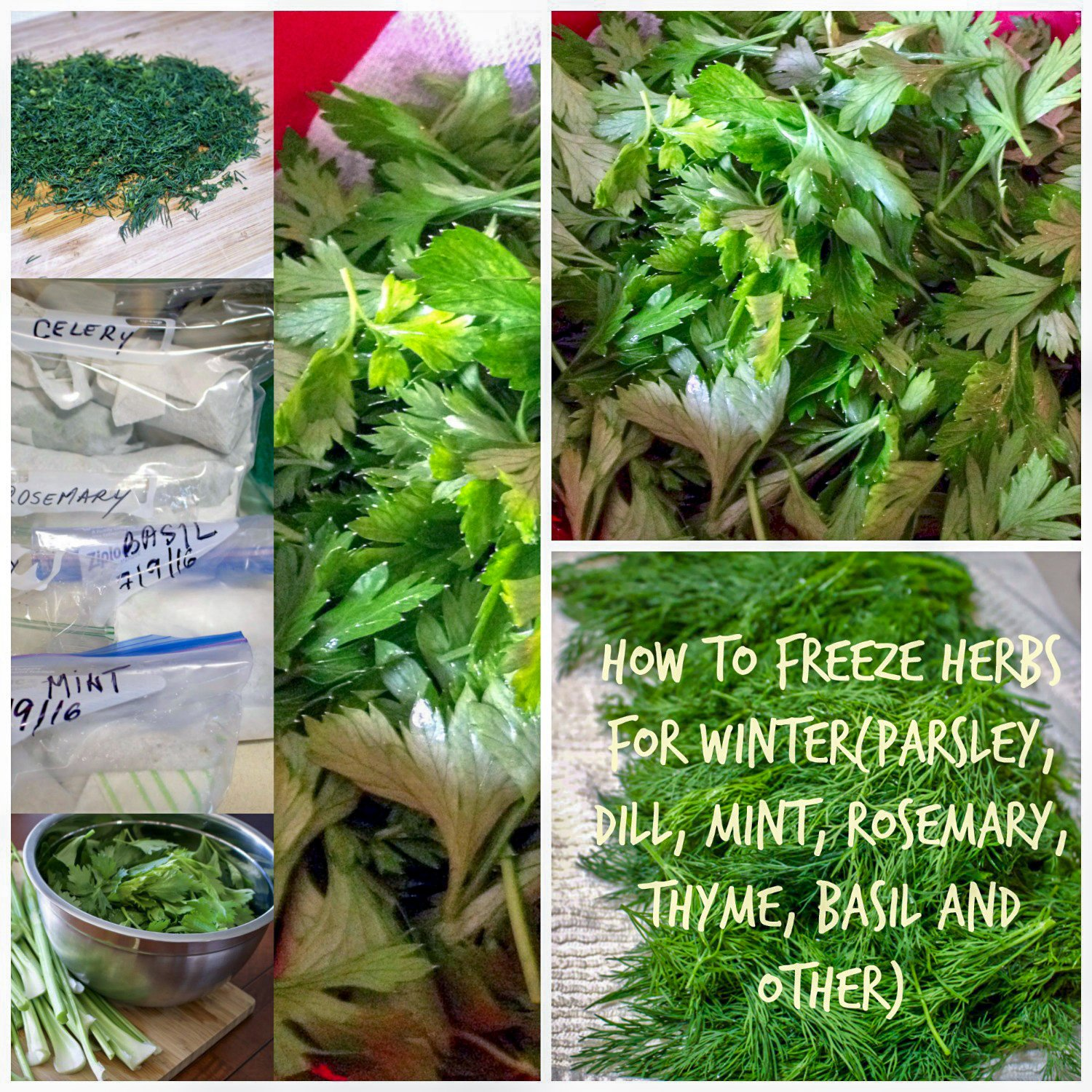 How to freeze herbs for winter- an easy tutorial to help you preserve some of your favorite herbs for the cold season.