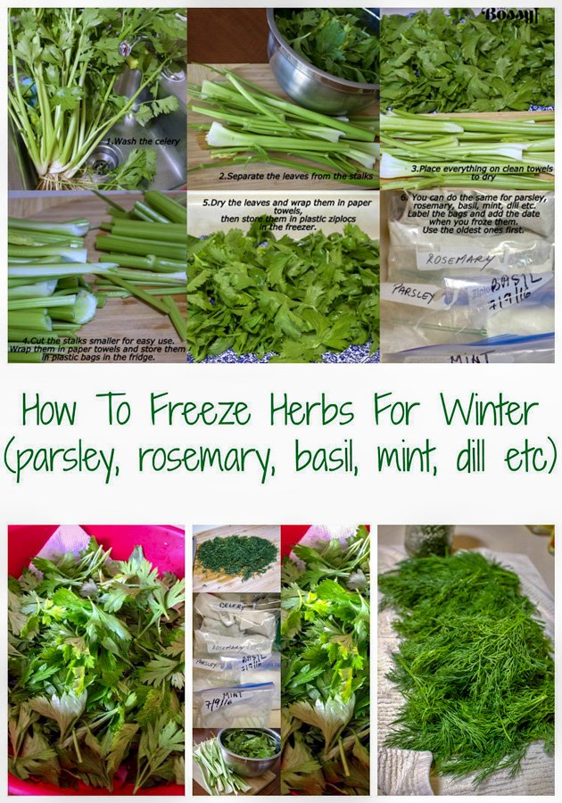 How to freeze herbs for winter2