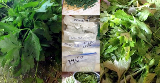 Every Day Herb Guide