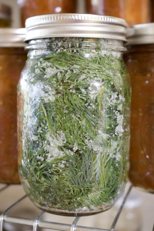 How To Preserve Herbs In Salt For Winter