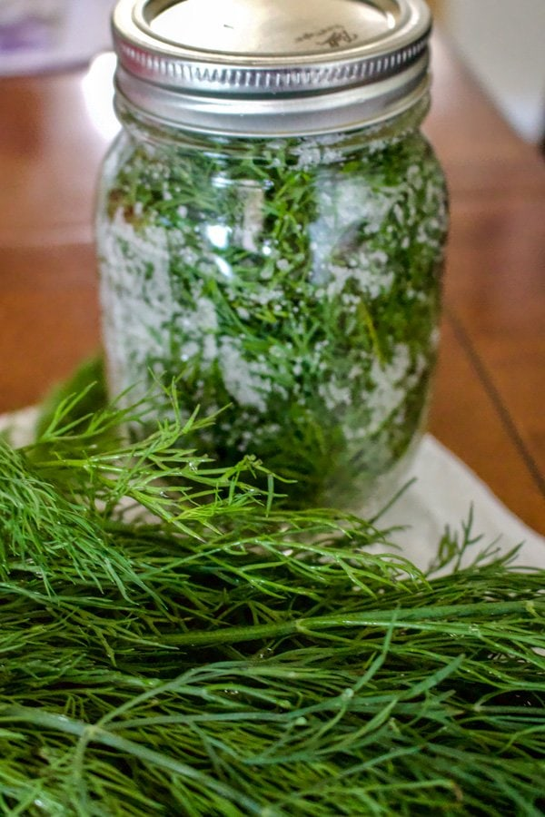 How To Salt Preserve Herbs For Winter-This is the easiest method for preserving herbs you grow in the garden. The leaves will stay fresh for months.