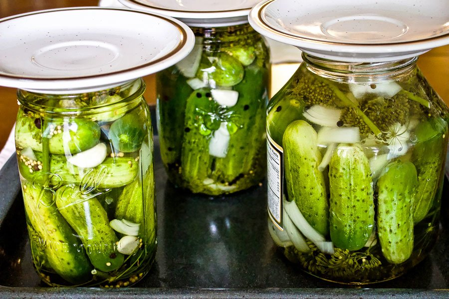 Summer Lacto Fermented Kosher Pickled Cucumbers1111