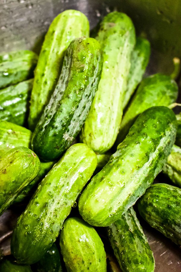 Summer Lacto Fermented Kosher Pickled Cucumbers22